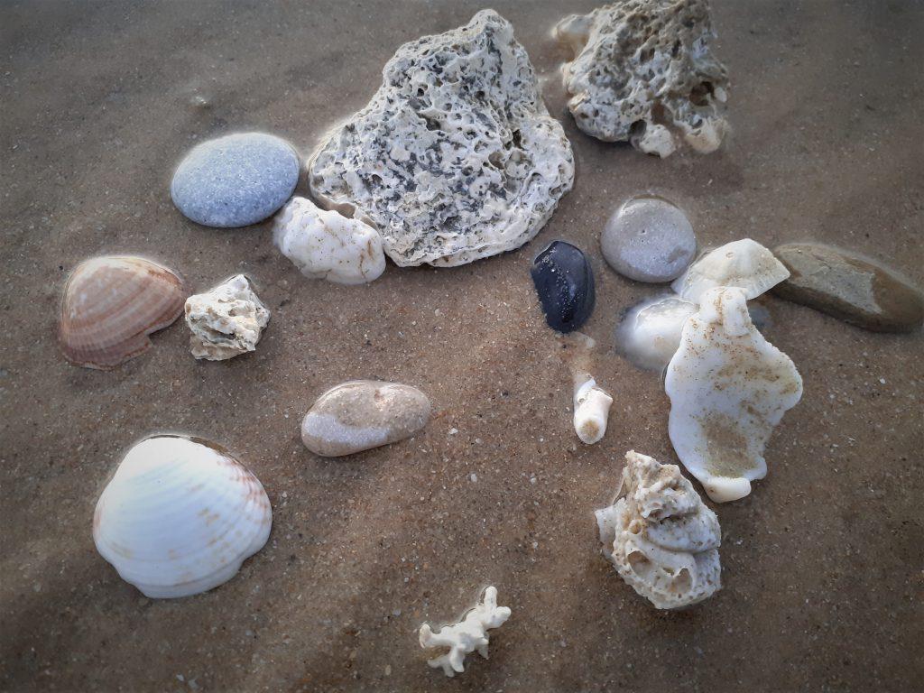 Piedras y conchas marinas