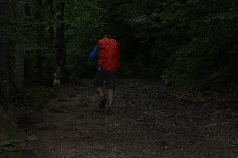 Un chico con su perro subiendo la montaña
