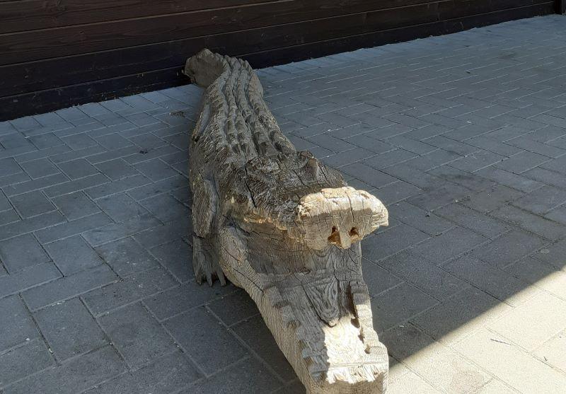 Cocodrilo de Madera en un zoo