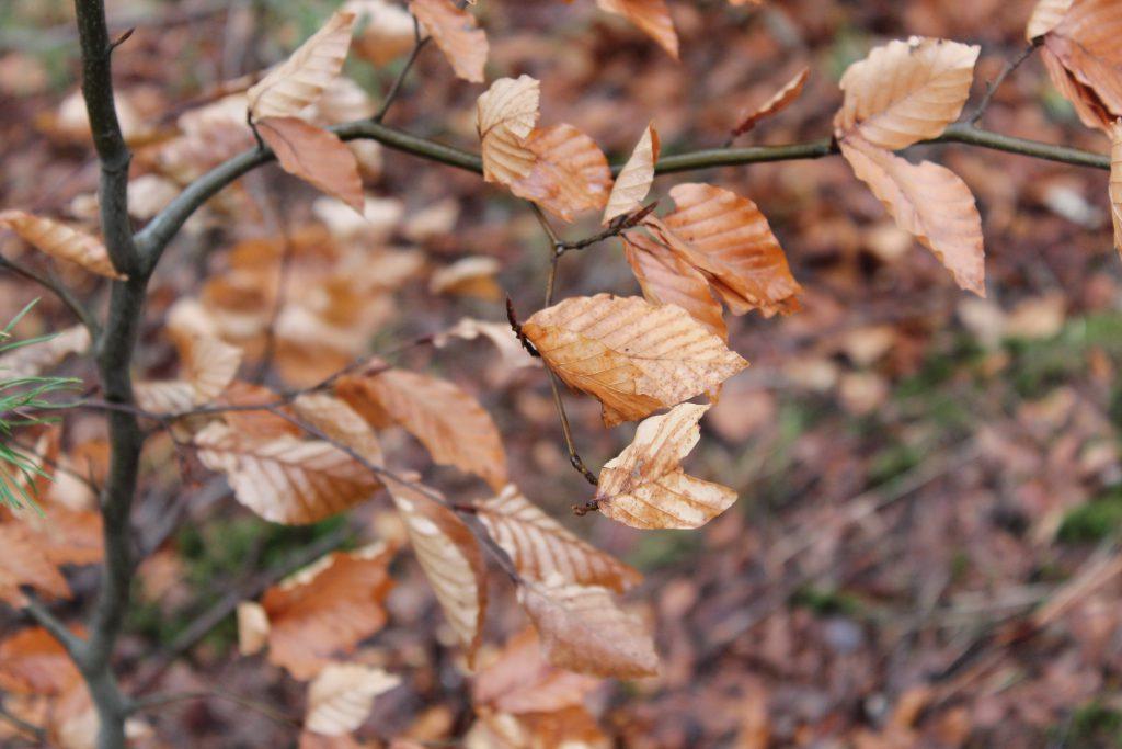 Hojas, marrones en la epoca de otoño en medio de un camino.
